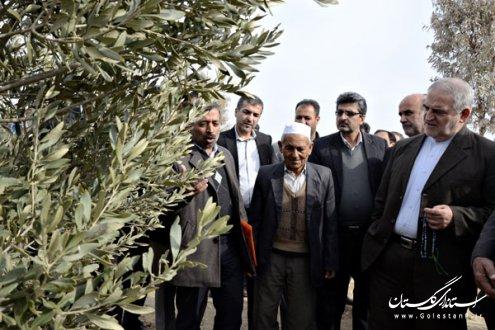 استاندار گلستان بر استفاده از ظرفيت اشتغالزايي در جهاد كشاورزي تأكيد كرد