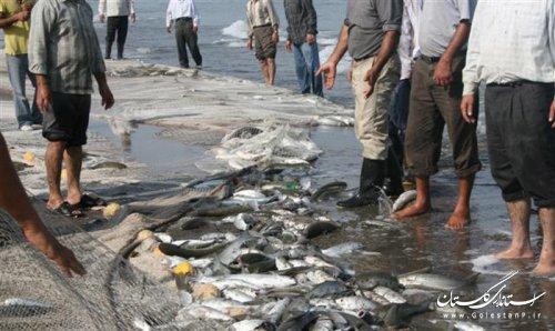 کشف و ضبط 6008 رشته دام های صیادی غیر مجاز در آب های ساحلی استان