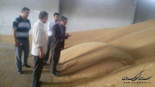 بخشدار لوه از مرکز خرید گندم در صادق آباد بازدید کرد