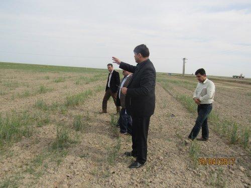 بازدید فرماندار گمیشان از مزارع شمال شهرستان
