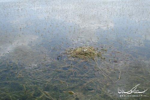 جاذبه های طبیعی شهرستان گنبدکاووس