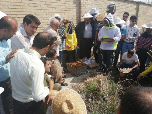 برندسازی راه حل پیشگیری از سودجویی در بازار عسل