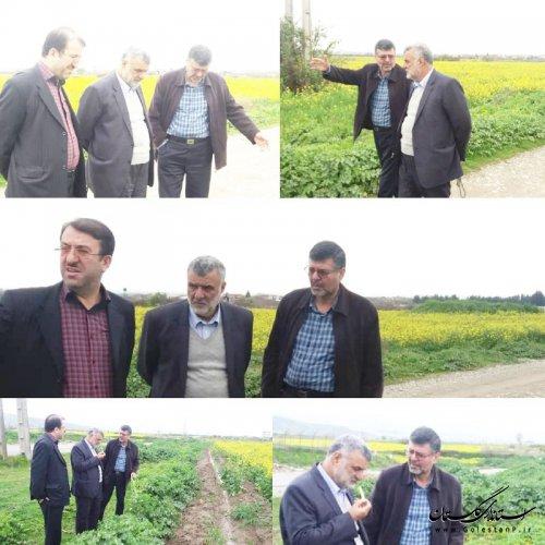 بازدید مهندس حجتی وزیر جهادکشاورزی از مزارع استان گلستان