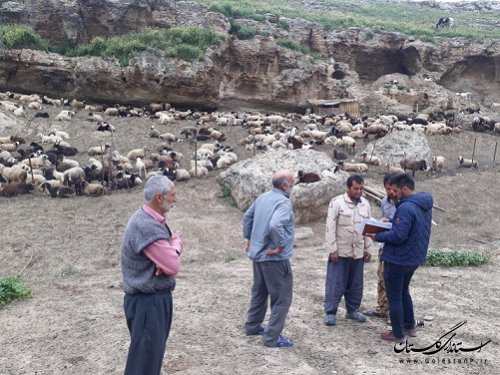 """معاون اداره امور مراتع: """"60هزار هکتار مدیریت چرا در مراتع گلستان انجام شده است."""""""