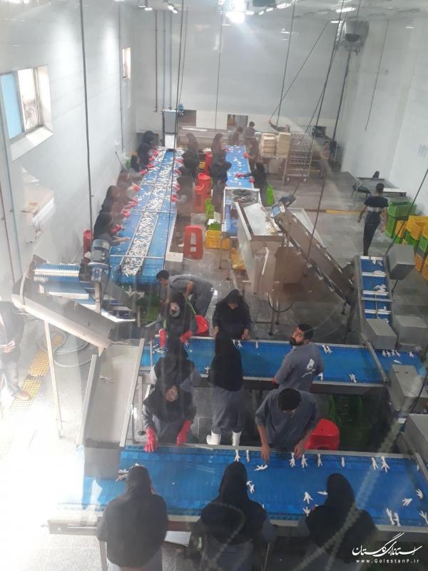 افتتاح متمرکز 28 طرح تولیدی و اشتغال زای تعاونی در ناحیه صنعتی کردکوی