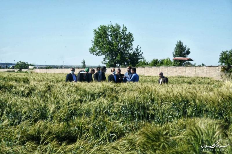 اصلاح نژاد ارقام کشاورزی موجب افزایش بازده محصول و جهش تولید می شود
