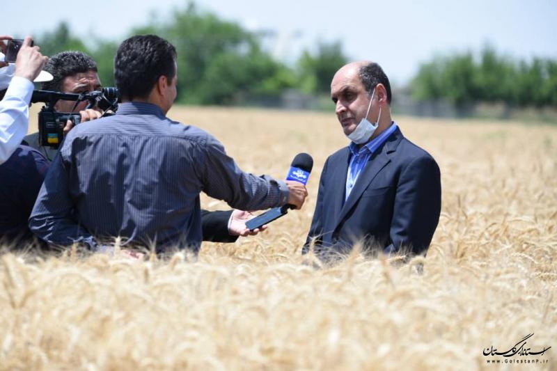 کشت گونه جدید گندم در سال جهش تولید موجب افزایش بهره وری می شود