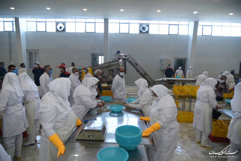 بازدید استاندار گلستان از تنها کارخانه فرآوری و بسته بندی میگوی استان در کردکوی