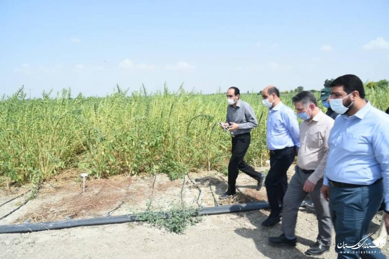 بازدید استاندار گلستان از طرح های تحقیقاتی مرکز تحقیقات و آموزش کشاورزی استان
