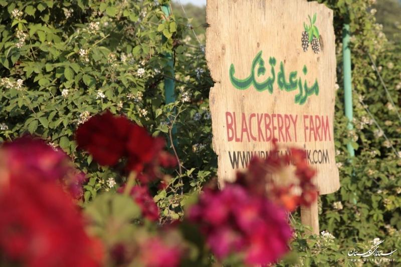 توسعه گردشگری کشاورزی در استان زمینهساز رونق اقتصادی در روستاها خواهد بود